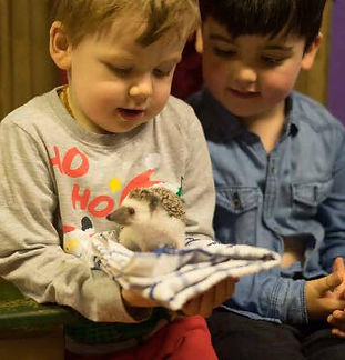 Children meeting Tiggy the African pygmy hedgehog as part of a Wee Critters experience