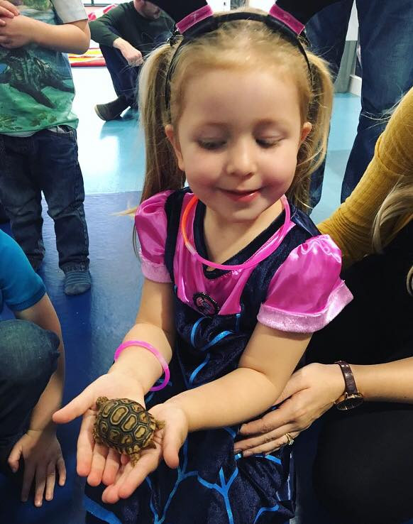 A little 'vampire' meets Topsy the leopard tortoise at a Wee Critters show