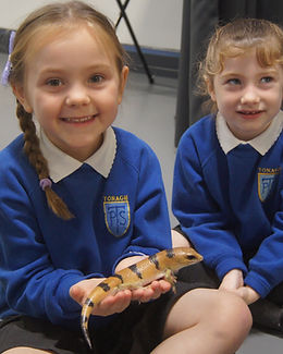 Primary School children meeting Smaug the Peter's banded skink at a Wee Critters school session