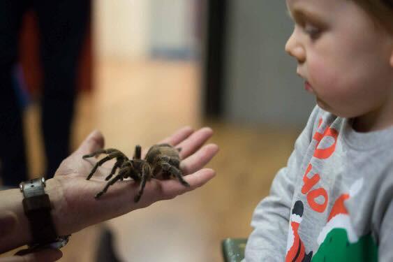 Charlotte the spider meets children
