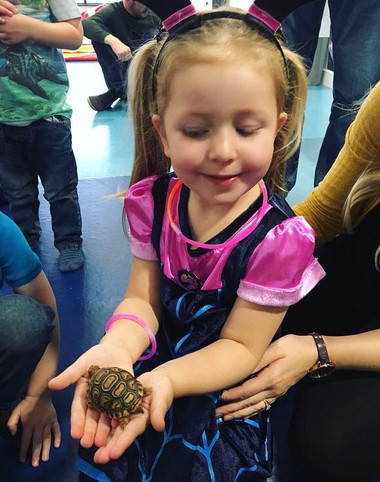 Grace meeting Topsy the baby leopard tortoise