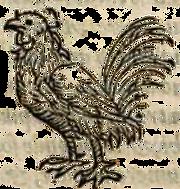 poule3.png
