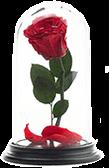 купить розу в колбе в моcкве
