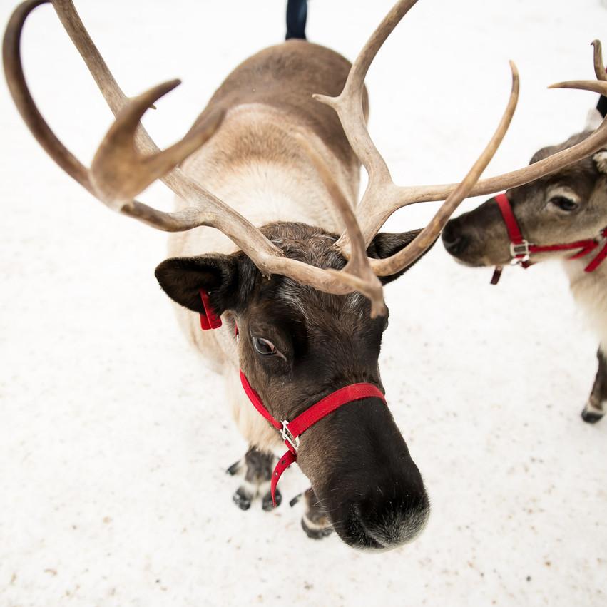 ROTR Reindeer Farm-23
