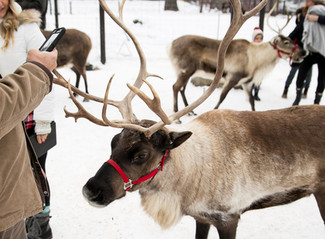 A Visit to the Leavenworth Reindeer Farm