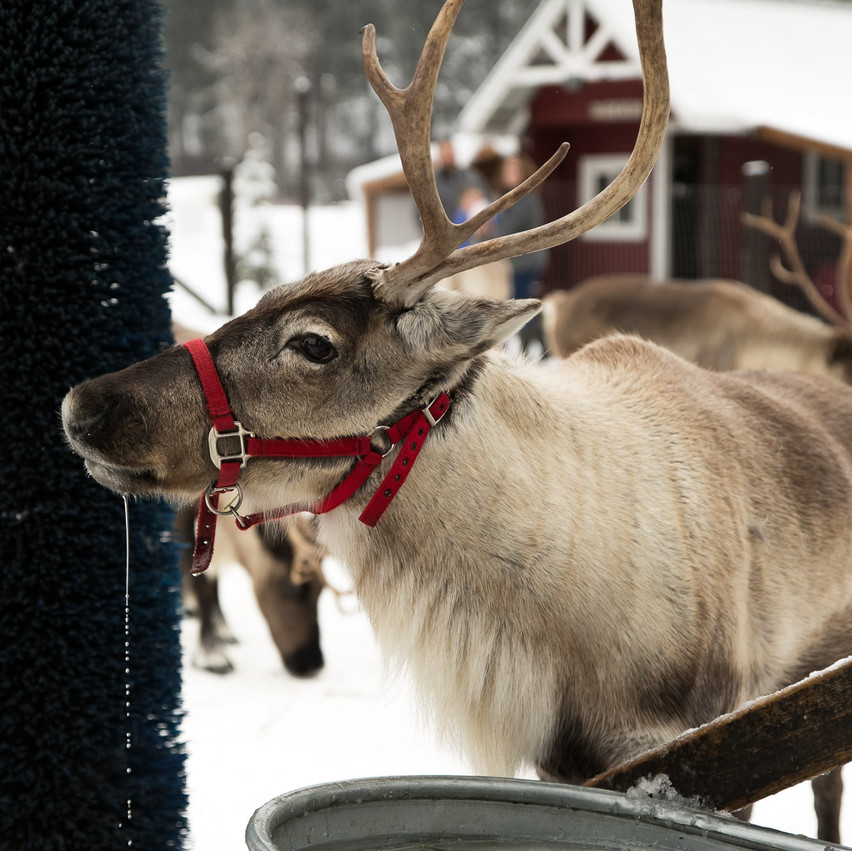 ROTR Reindeer Farm-36