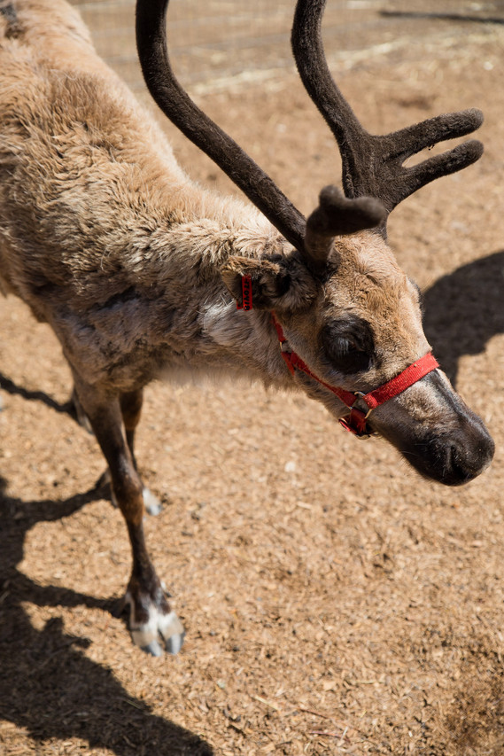 ROTR Reindeer Farm-58
