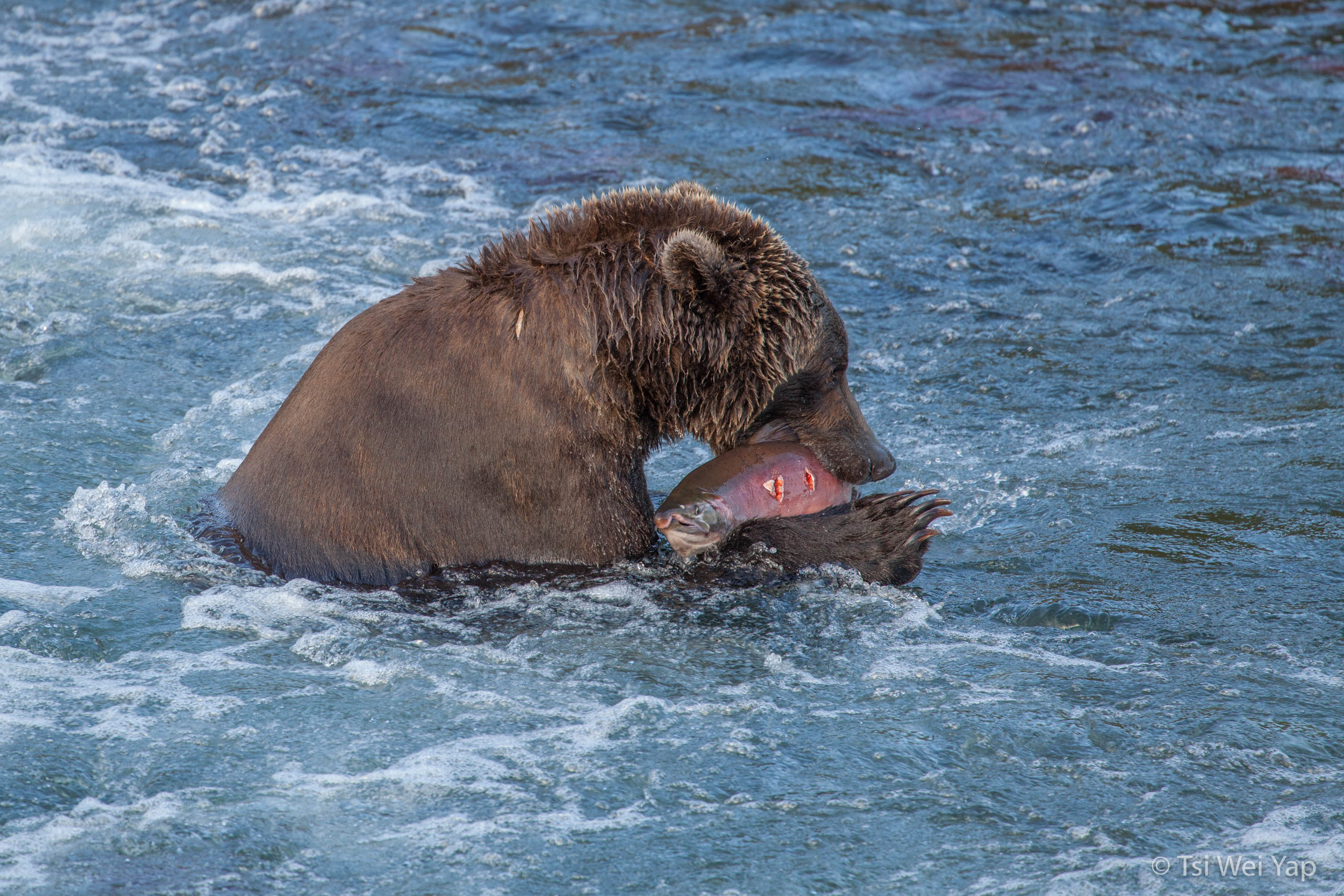 Alaska-3487