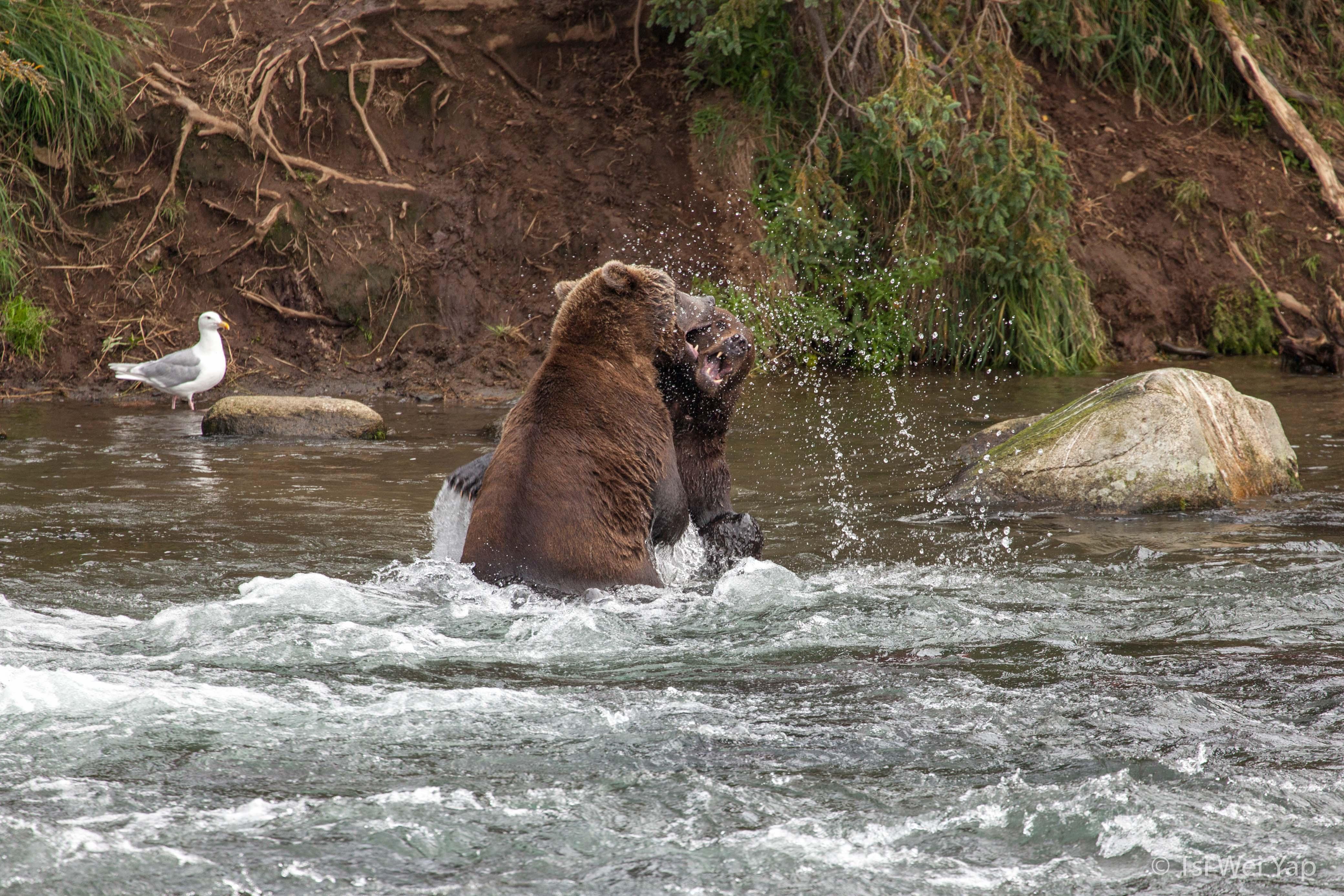 Alaska-2870
