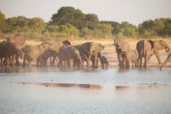 Elephants - Hwange National Park