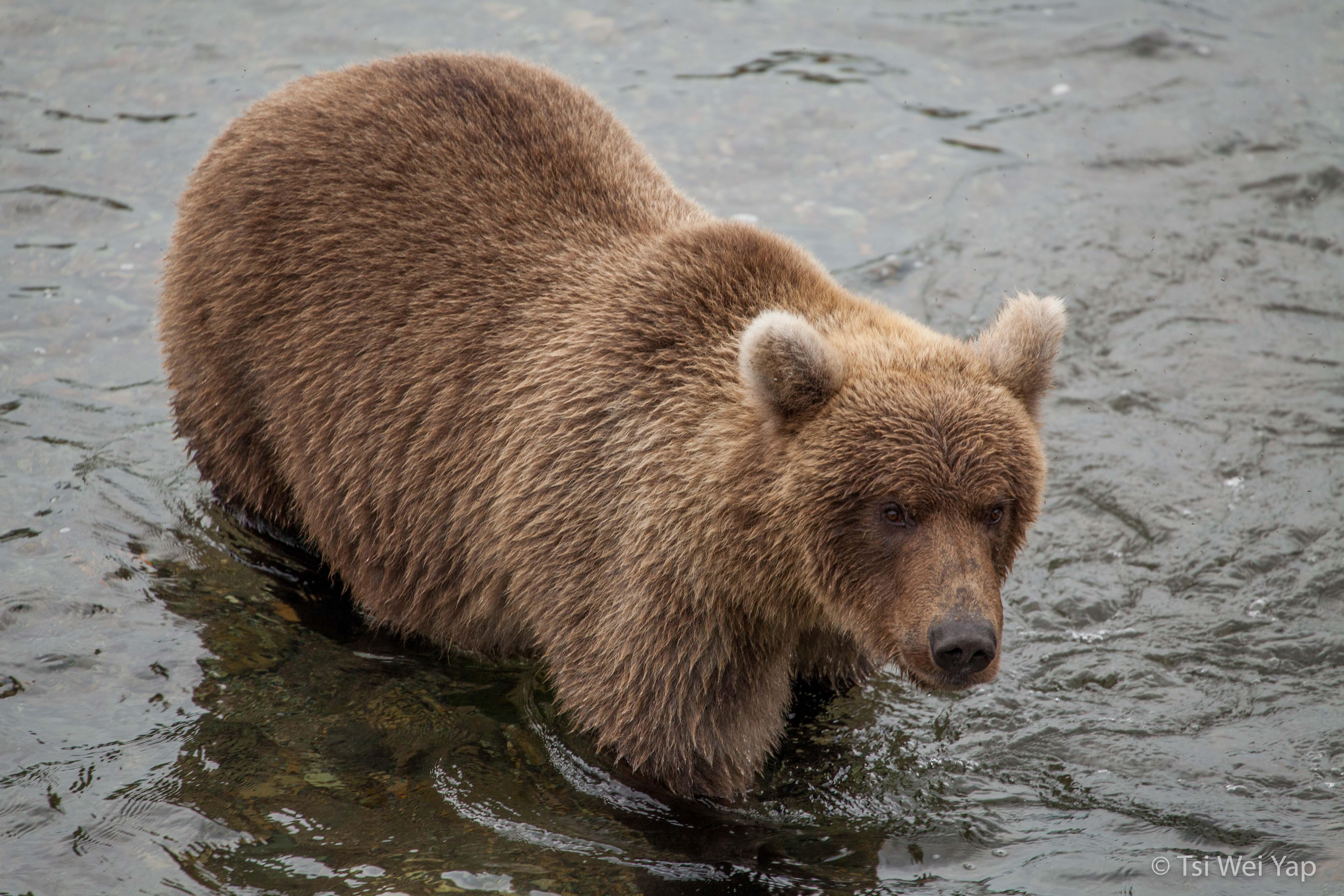 Alaska-2383