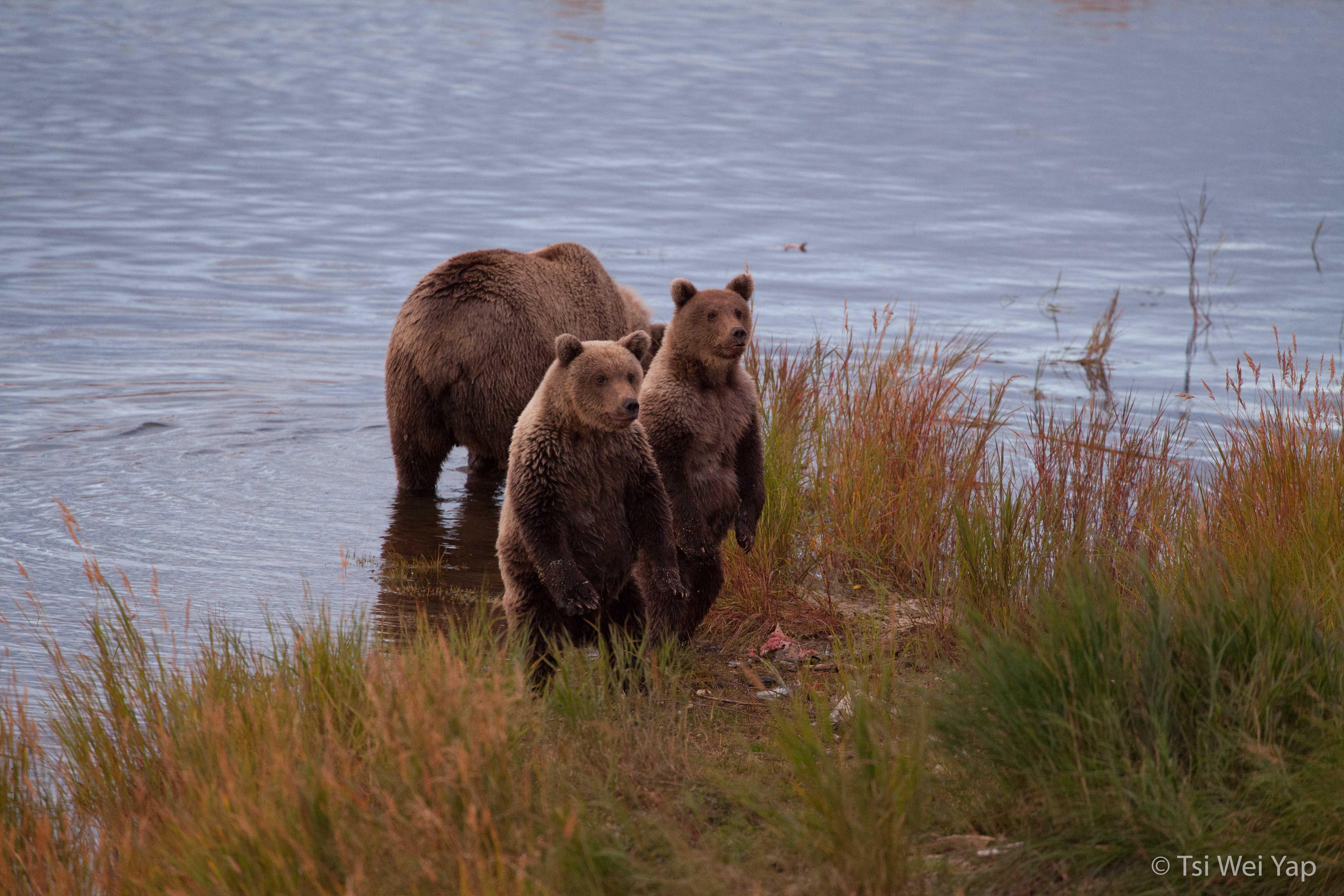 Alaska-3925