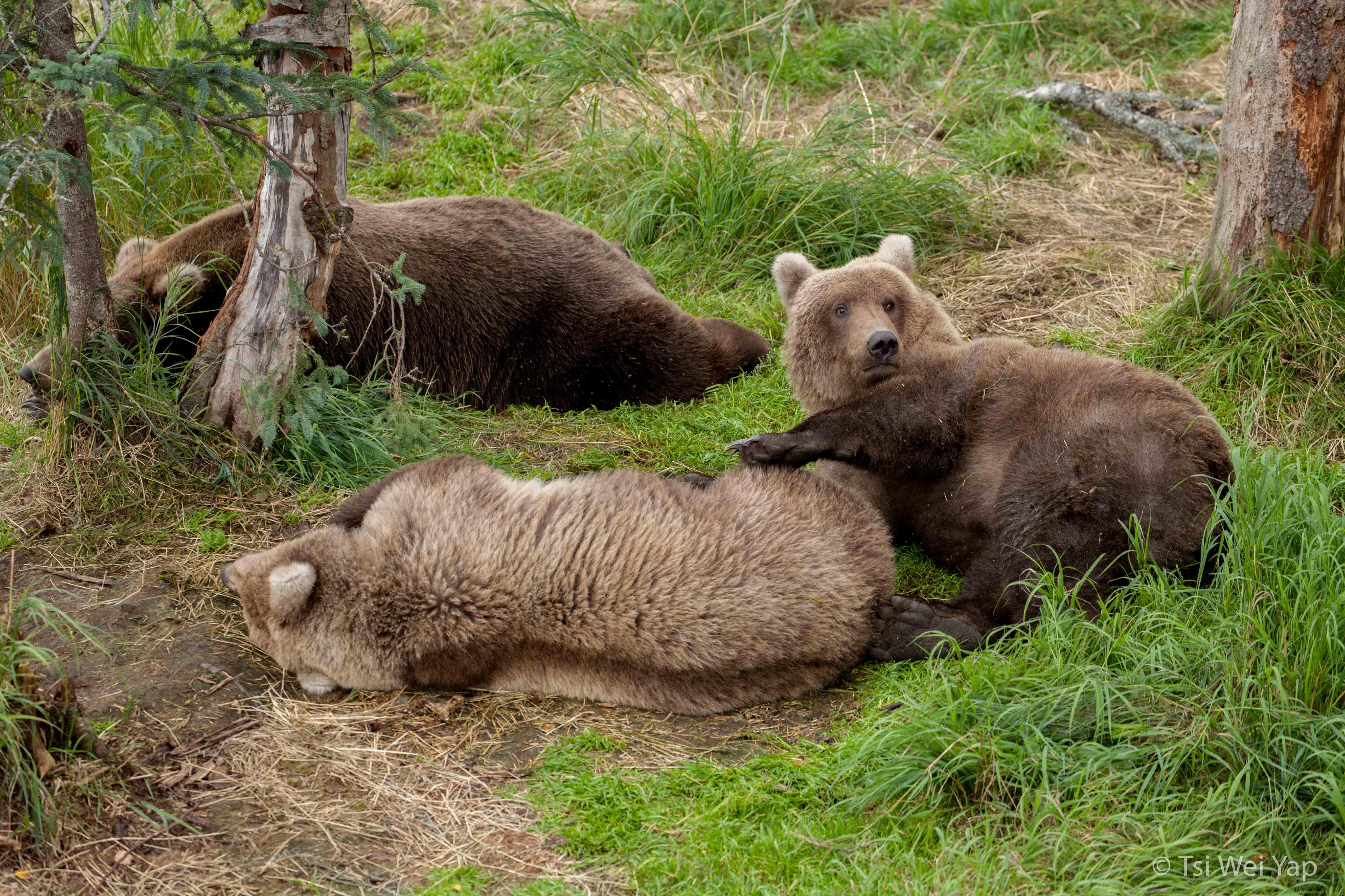 Alaska-2547