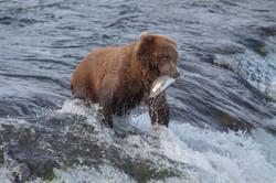Alaska-3355