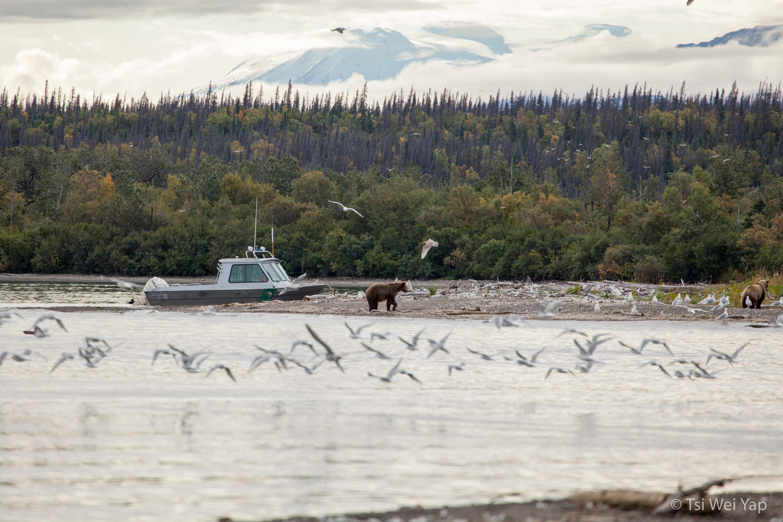 Alaska-2606