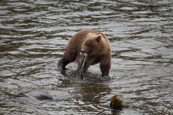 Alaska-2366