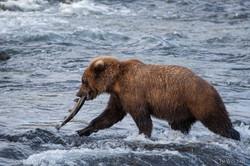 Alaska-3406
