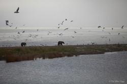Alaska-4051