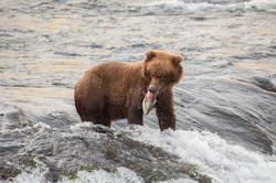 Alaska-3878