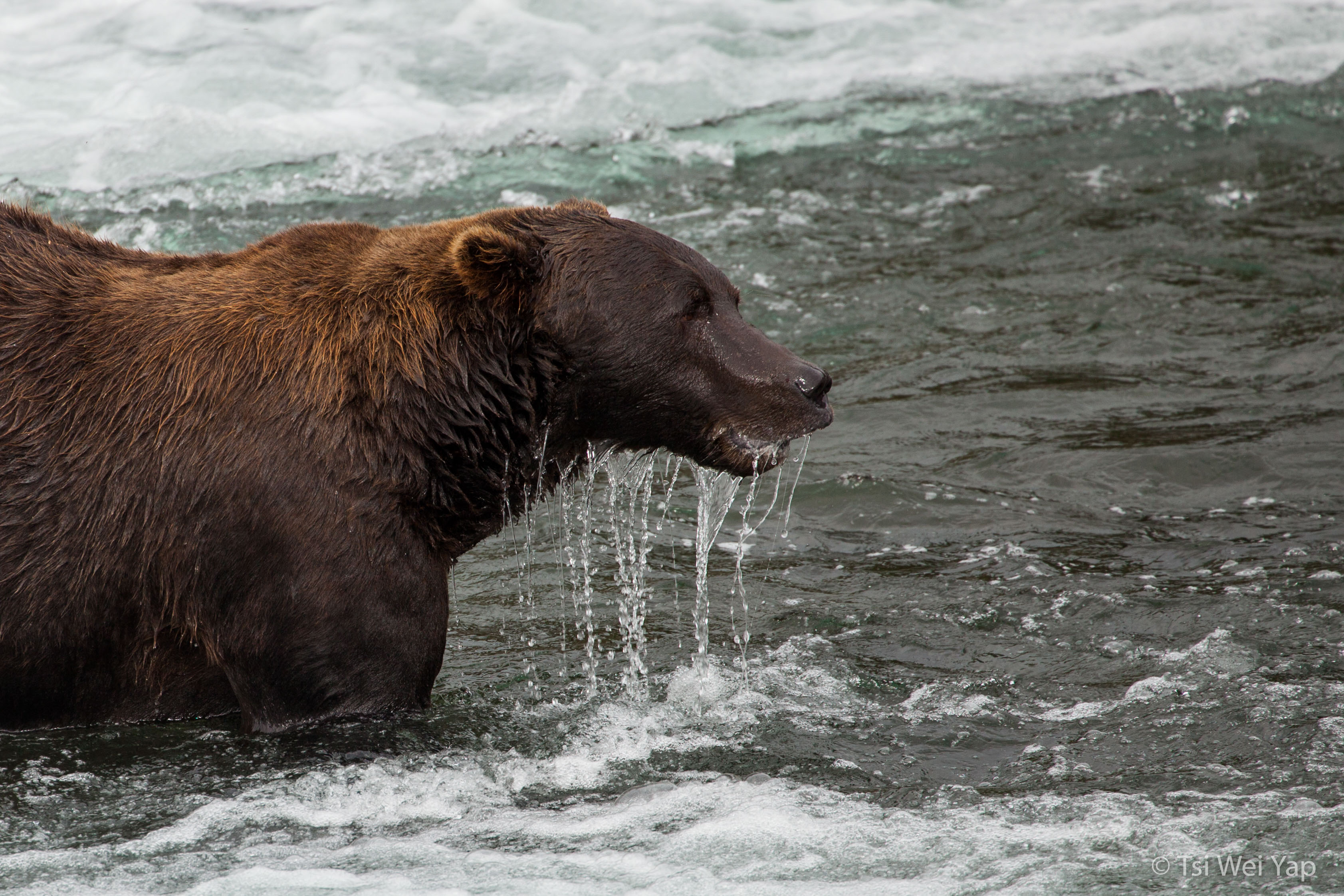 Alaska-2464