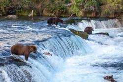 Salmon Fishing - Brooks Falls