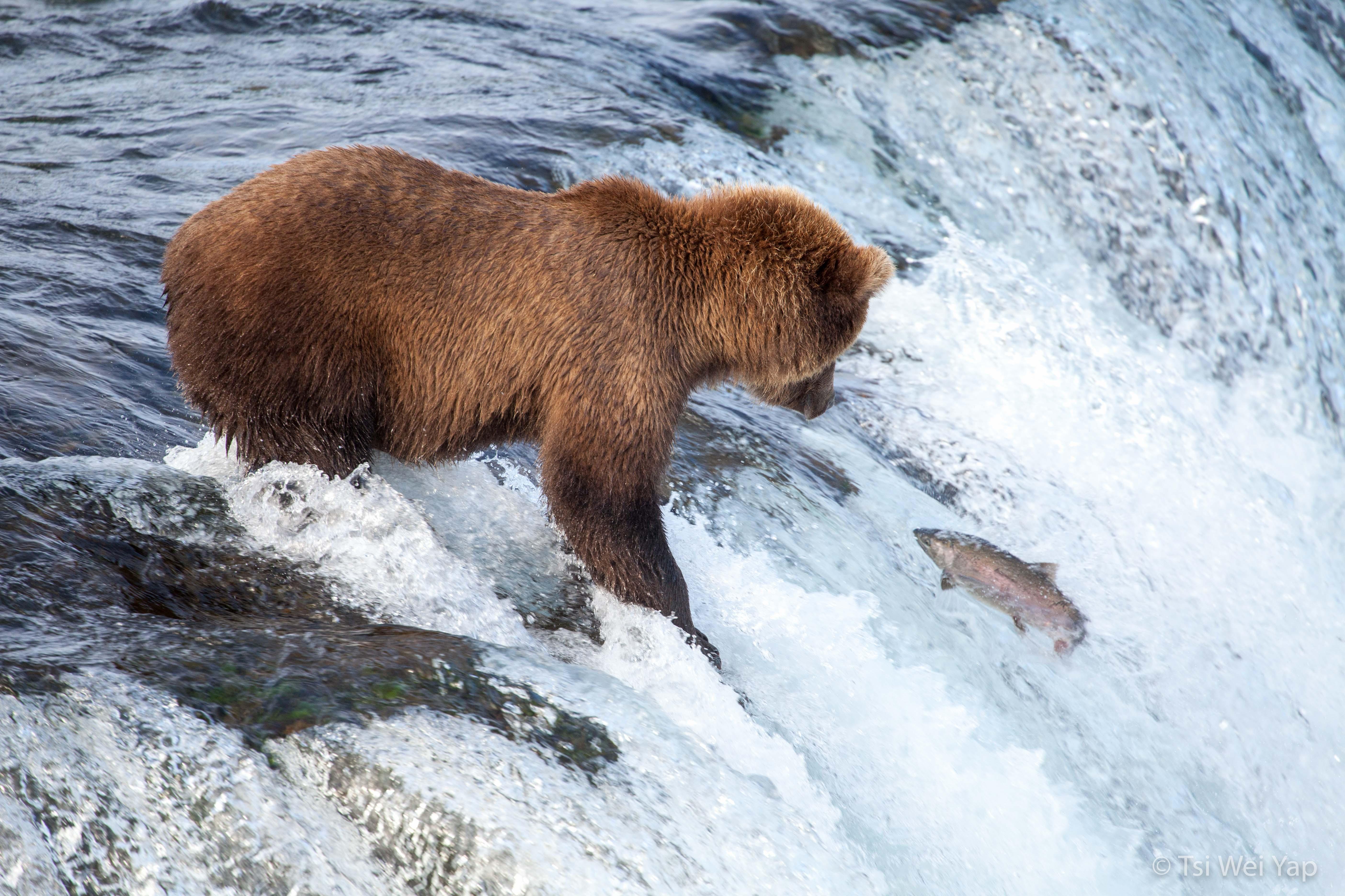 Alaska-3339