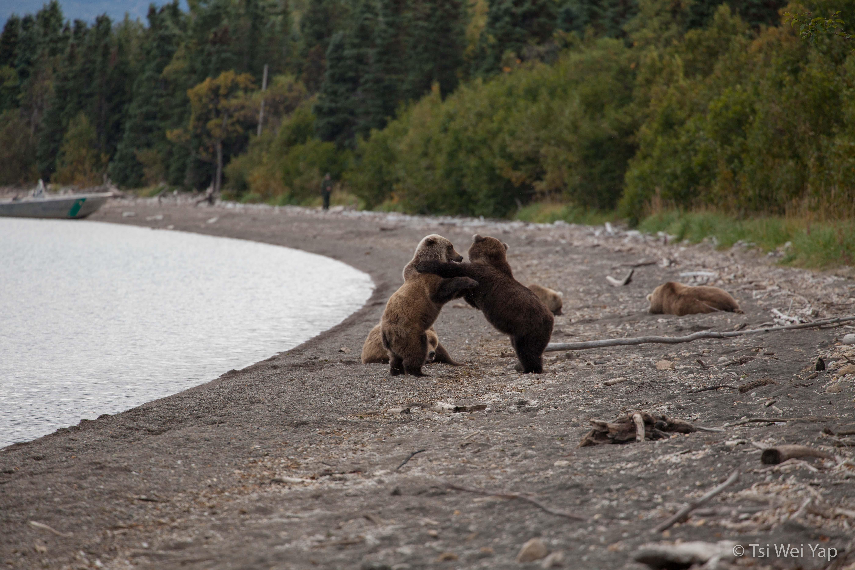 Alaska-3795