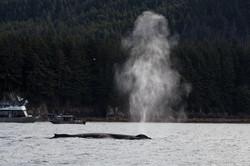 Alaska-9535