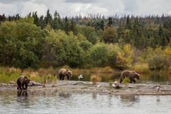 Alaska-3146