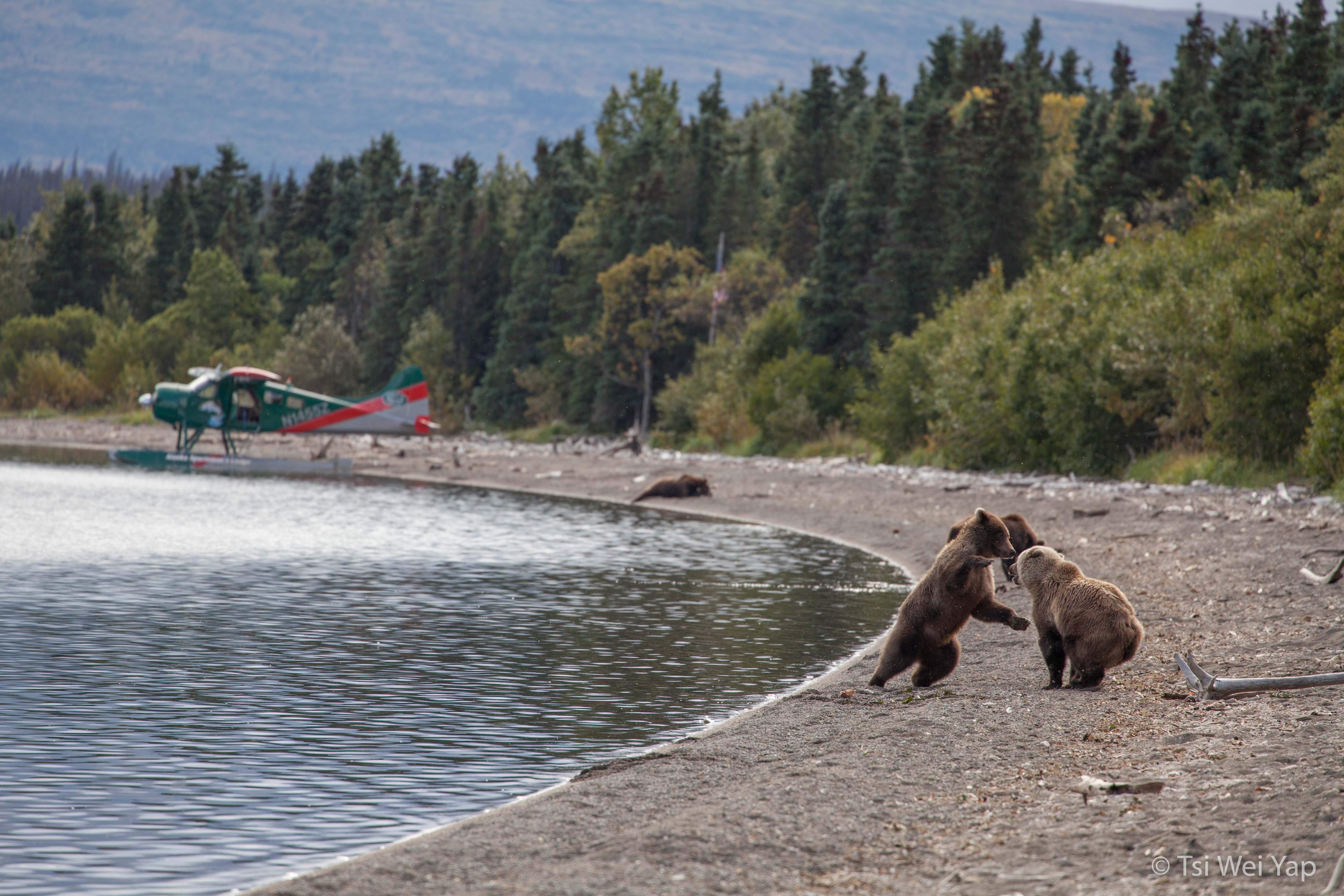 Alaska-3299