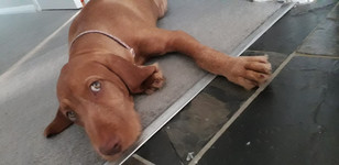 Lucy 16 wks mellow