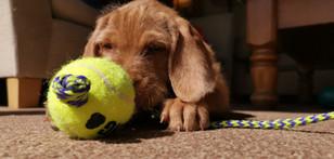 Annie playing Tennis