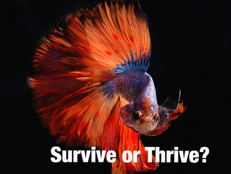 Built to Survive or Thrive?
