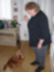 Chesapeake Dog Training Annapolis 1.jpg