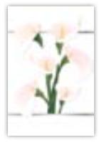 HIC8360 Mini BeautIful Lilies