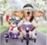HIC15062 Biker Dogs