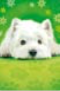 s0028b Pretty Dog