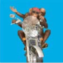 HiC4093 Big Biker monkey