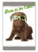 HIC8180 Mini Sunglasses