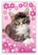 HIC8296B Mini Adorable Cat
