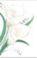 s0080 WhitE Flowers
