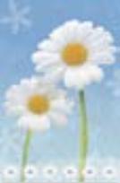 HIC3697 Pretty Daisies