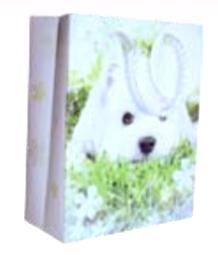 Cute Dog M