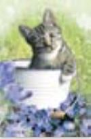 HIC103C Cat in a Bucket
