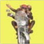 HIC15004 Biker Monkey
