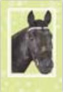 s0027 Pretty Horse