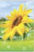 HIC3642 Beaming Sunflower