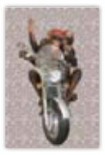 HIC8150B Mini Monkey Ride