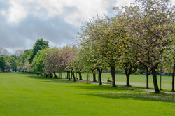 Summer on the Meadows