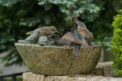 Starling Bath